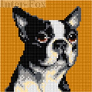 Kanwa 15 x 15 cm, 2719 Boston Terrier.